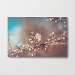 White Cherry Flowers Branch Spring Day Metal Print