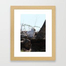 Kentucky's Snowy Owl Framed Art Print