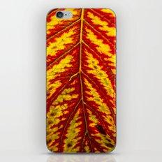 Tiger Leaf iPhone & iPod Skin
