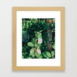 Aerial Plants Framed Art Print