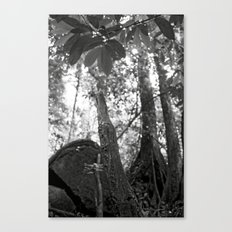 Umbilical Canvas Print