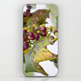 Green and purple grapes on the vine iPhone Skin