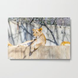 Purrfect Metal Print