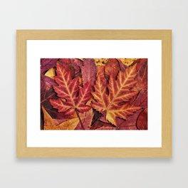 Colorful Autumn Maple Leaf Indian Summer Red Framed Art Print