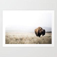 Bison stance Art Print