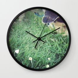 Mako meandering through mushrooms Wall Clock