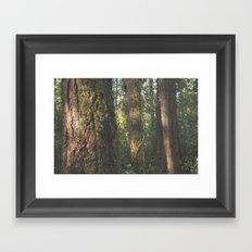 Mossy Trees Framed Art Print