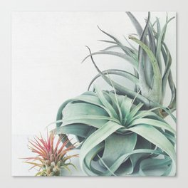 Air Plant Collection Canvas Print