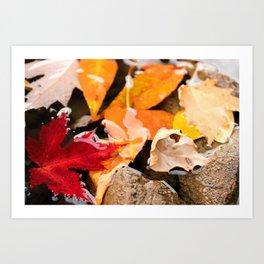 The River in Autumn. Art Print