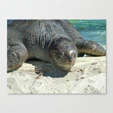 Turtle Ashore Canvas Print