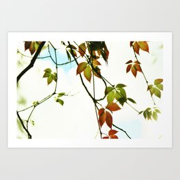 Creeper in autumn colors Art Print