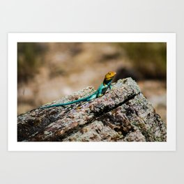 Collard Lizard Art Print