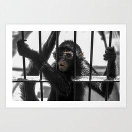 Monkey 4 Art Print