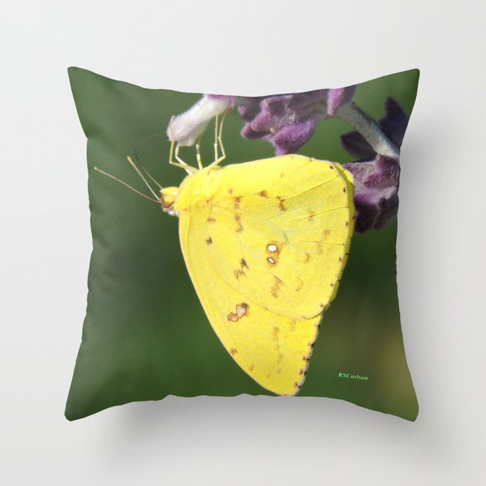 Orange Sulphur Butterfly Throw Pillow