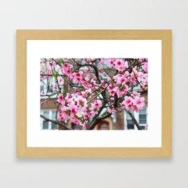 Spring in the city Framed Art Print