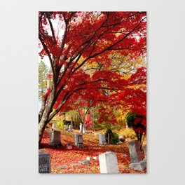 Sleepy Hollow Maples Canvas Print