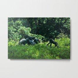 Pittsburgh Zoo - Gorilla Metal Print
