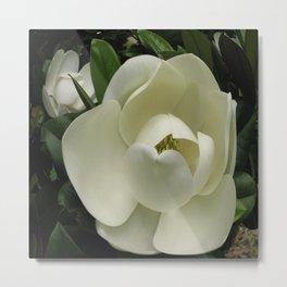 Fleur de Magnolia Metal Print