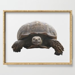 Sulcata Tortoise Serving Tray