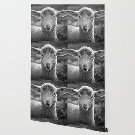 Lamb's portrait Wallpaper