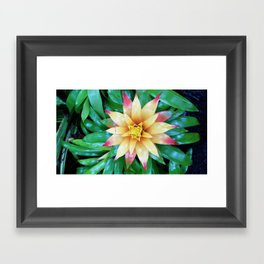 Hawaiian Flower Framed Art Print
