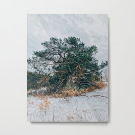 Green in white winter Metal Print