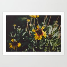 Autumn Daisies Art Print