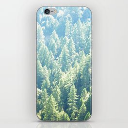 California trees iPhone Skin