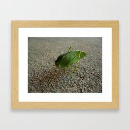 Katydid Closeup Framed Art Print