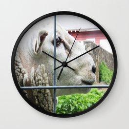 Silly Sly Sheep Wall Clock