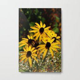 Backed Eyed Susan In Autumn Metal Print