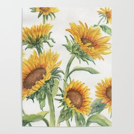 Blooming Sunflowers Poster