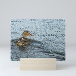 Mallard in the Rain Mini Art Print