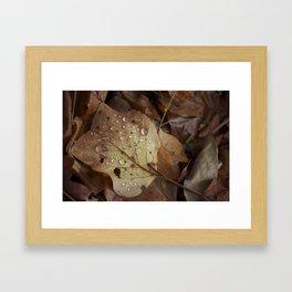 Autumn Droplet Framed Art Print