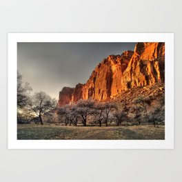 Capitol Reef - Apricot Trees and Red Rock Wall Art Print