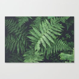Fern Bush Nature Photography | Botanical | Plants Canvas Print