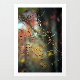 Dusk Bloom Art Print