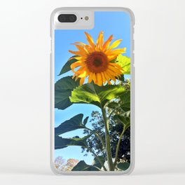 Southern Maine Sunflower Clear iPhone Case