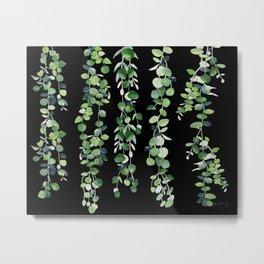 Eucalyptus Sur Fond Noir Metal Print