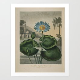 Temple of Flora Blue Egyptian Water Lily Art Print