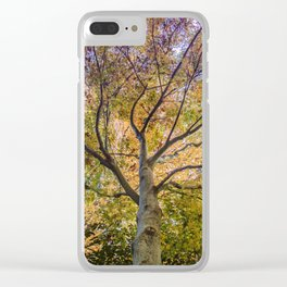Beautiful Trees / 12 Clear iPhone Case