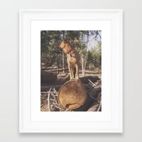 simba Framed Art Prints featuring Simba by Donovan Bennett Designs
