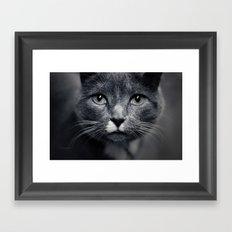 Les Yeux du Chat Framed Art Print