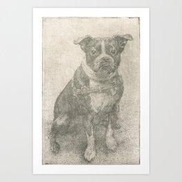 Henry the Boston Terrier  Art Print