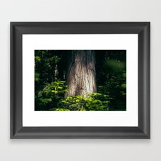 Cedar Framed Art Print
