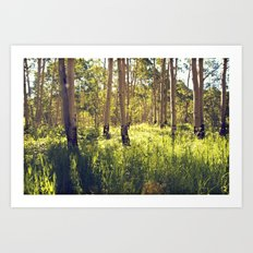 Summer Aspens Art Print