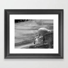 Flamingo, Fuerteventura. Framed Art Print