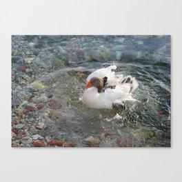 Duck Splashing Water Creating Ripples on Riverbank Canvas Print