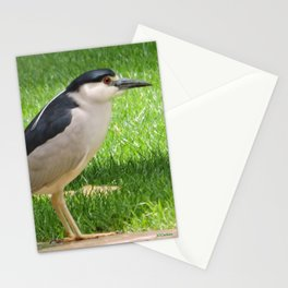Black Crowned Night Heron in the Park Stationery Cards
