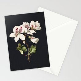 Pelargonium album bicolor by M de Gijselaar(1830) Stationery Cards